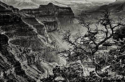 Cape Royal B&W, Grand Canyon