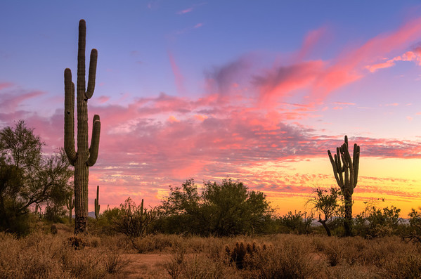 345 - Sonoran Desert Sunset