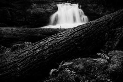 Whitehorse Falls Log B&W